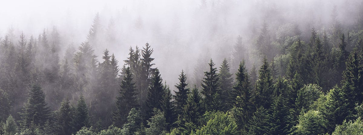 forest with misty air